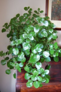 Best indoor plants you can grow without care 11