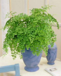 Best indoor plants you can grow without care 14