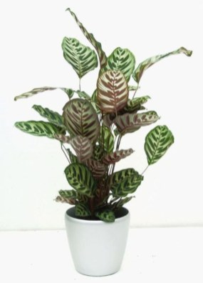 Best indoor plants you can grow without care 17