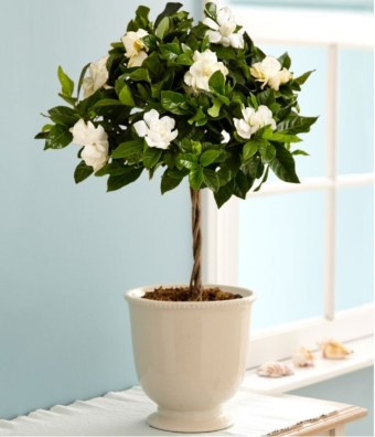 Best indoor plants you can grow without care 18