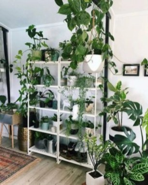 Best indoor plants you can grow without care 30
