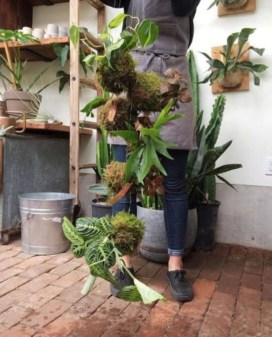Best indoor plants you can grow without care 44