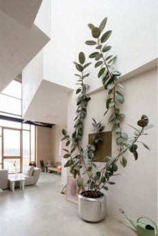 Best indoor plants you can grow without care 46