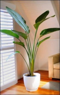 Best indoor plants you can grow without care 47