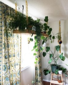 Best indoor plants you can grow without care 54