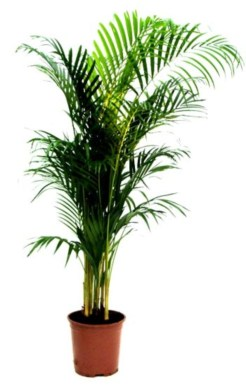 Best indoor plants you can grow without care 58