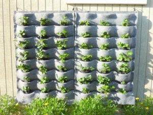 Creative ways to grow strawberry at your garden 14