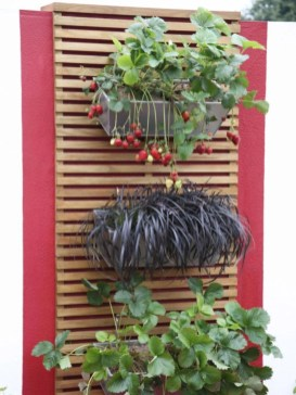 Creative ways to grow strawberry at your garden 22