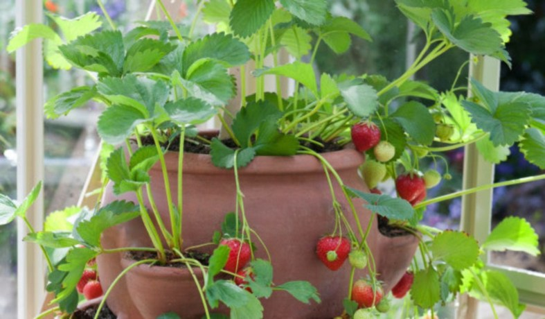 Creative ways to grow strawberry at your garden 31