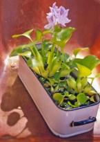 Diy indoor container water garden ideas 03