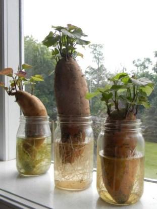 Diy indoor container water garden ideas 08