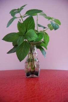 Diy indoor container water garden ideas 14