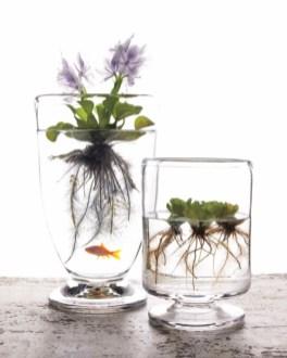 Diy indoor container water garden ideas 19