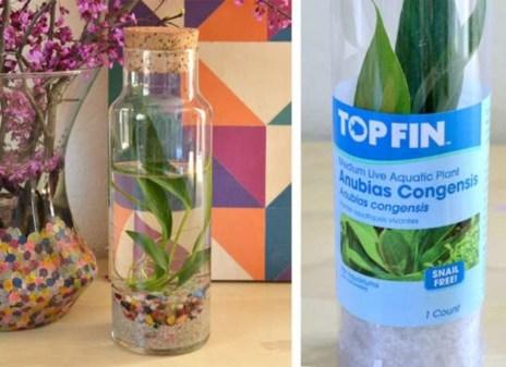 Diy indoor container water garden ideas 27