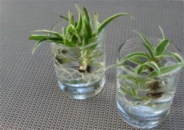 Diy indoor container water garden ideas 36