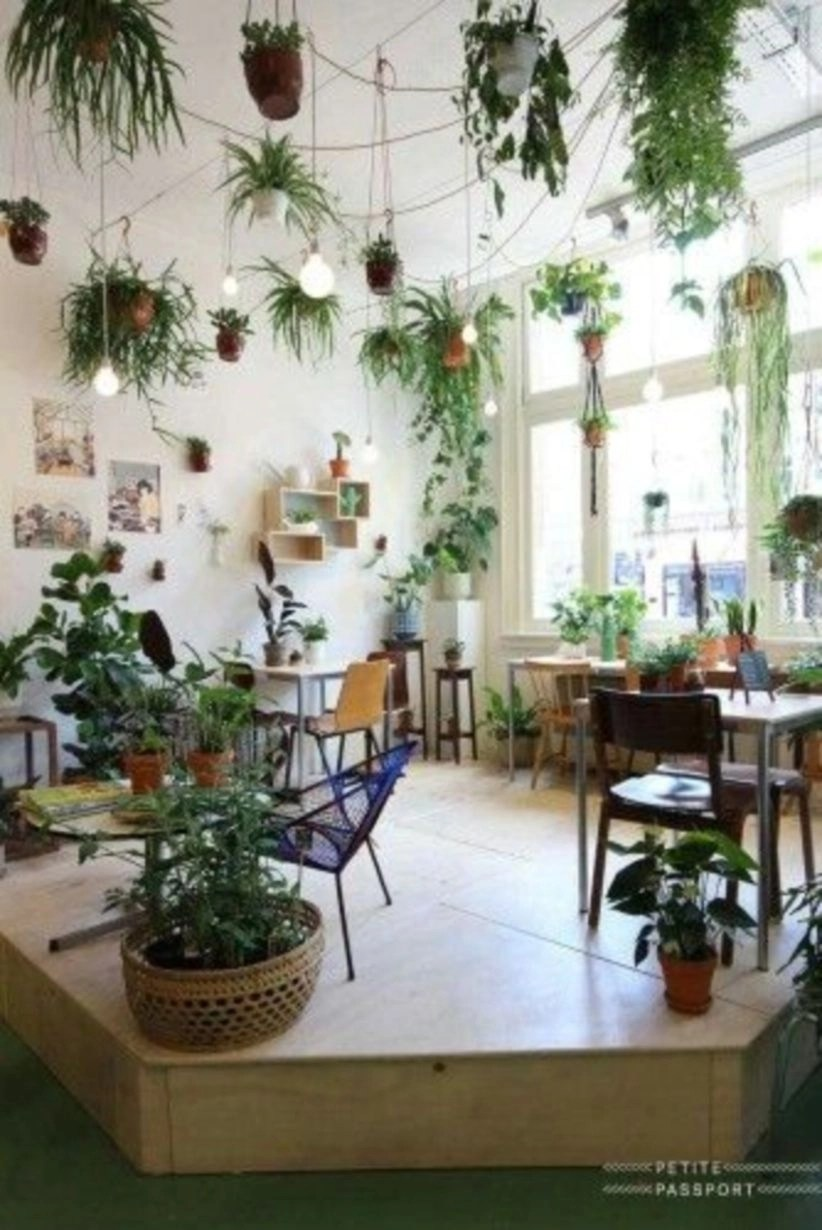 Hanging plants and lightbulbs
