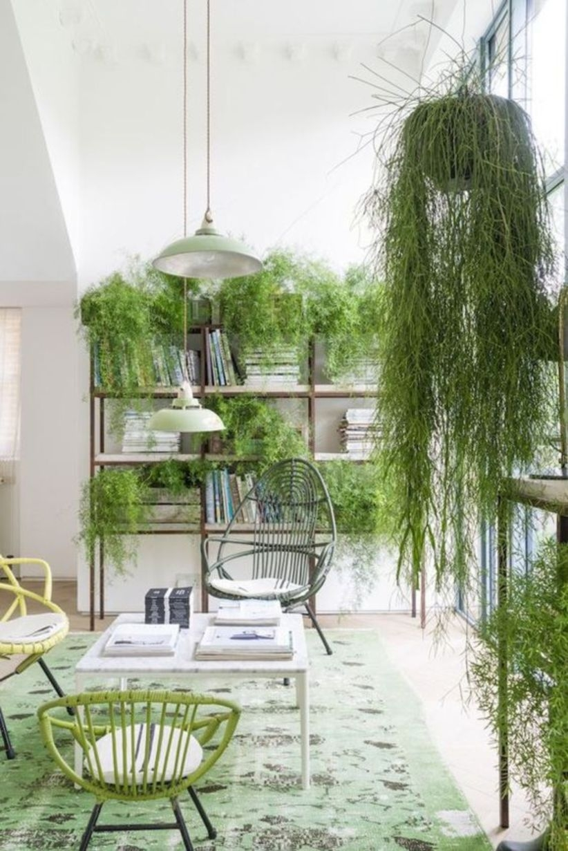 Love of plants green for room office