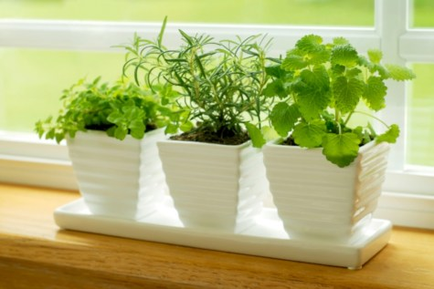 Great indoor herb garden ideas for healthy life 20