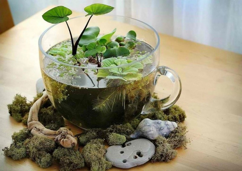Create a water garden