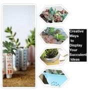 Creative ways to display your succulent