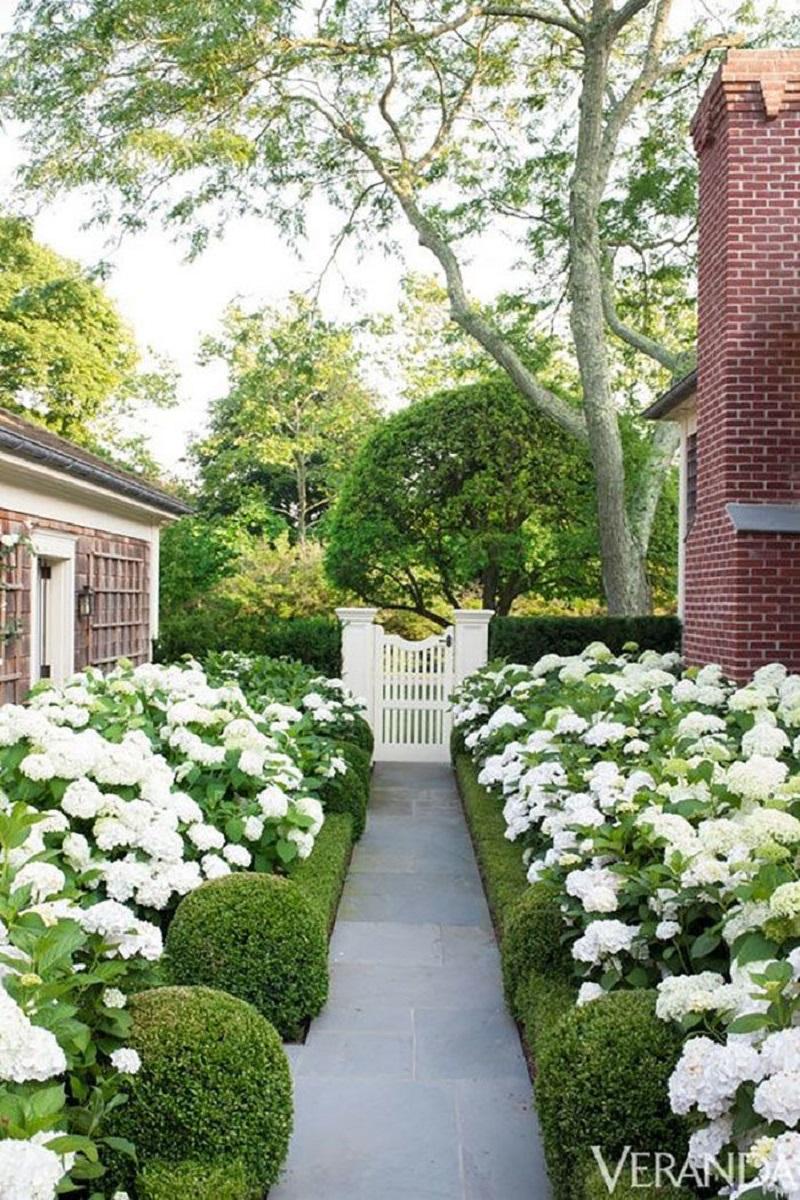 Dreamy white hydrangea