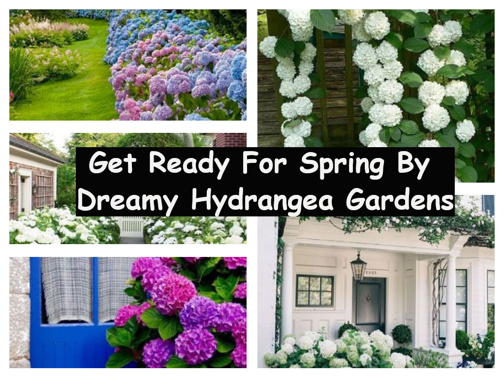 Get ready for spring by dreamy hydrangea gardens