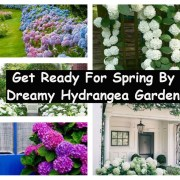 Get ready for spring by dreamy hydrangea gardens