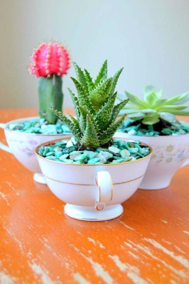 Teacup succulent-