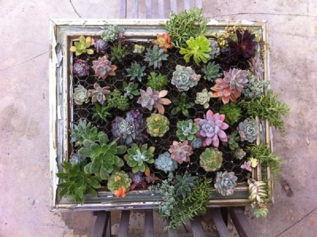 Living wall from vintage frame