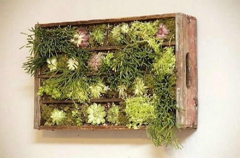 Old wooden crate living wall