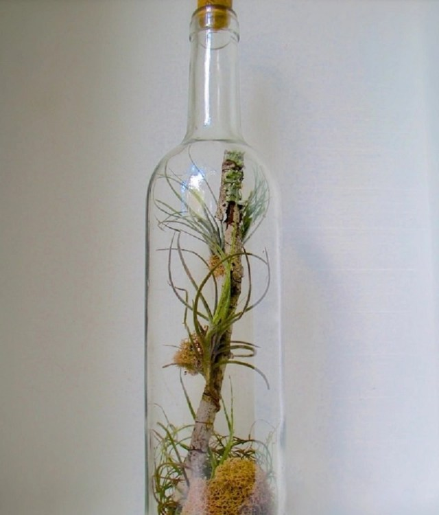 Wine bottle terrarium