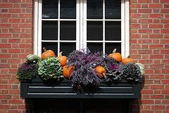 Cheap and easy fall window boxes ideas 10