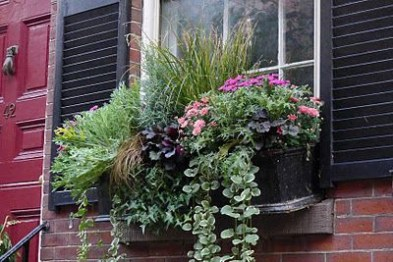 Cheap and easy fall window boxes ideas 11