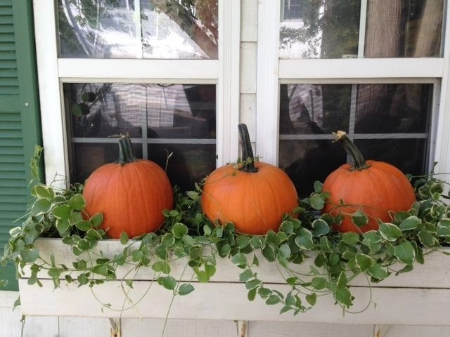 Cheap and easy fall window boxes ideas 22