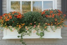 Cheap and easy fall window boxes ideas 24