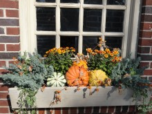 Cheap and easy fall window boxes ideas 37