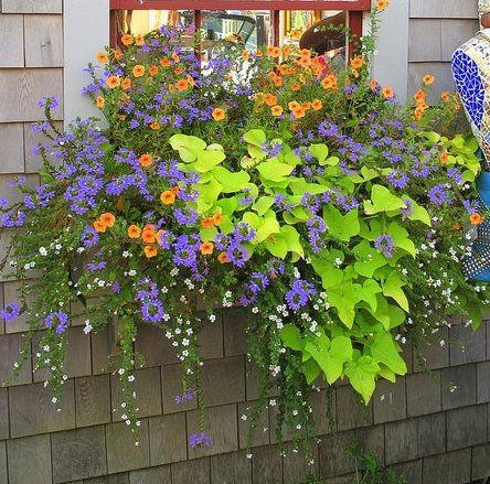 Cheap and easy fall window boxes ideas 59