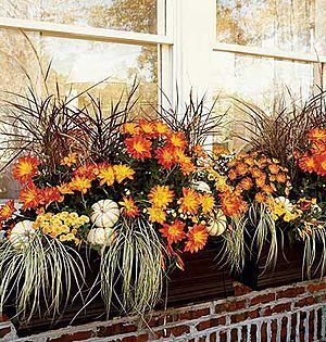 Cheap and easy fall window boxes ideas 62