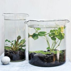 Simple ideas for adorable terrariums 06