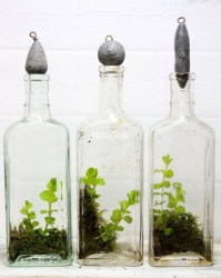 Simple ideas for adorable terrariums 08