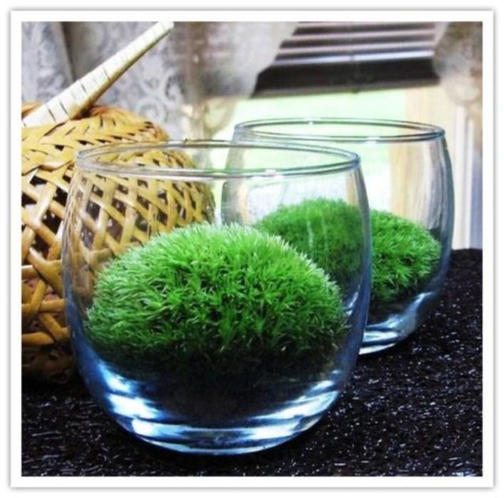 Simple ideas for adorable terrariums 26
