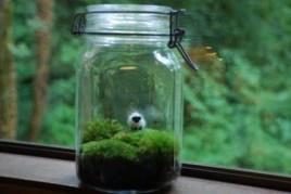 Simple ideas for adorable terrariums 38