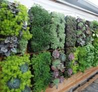 Inspiring vertical garden ideas for your small space 37