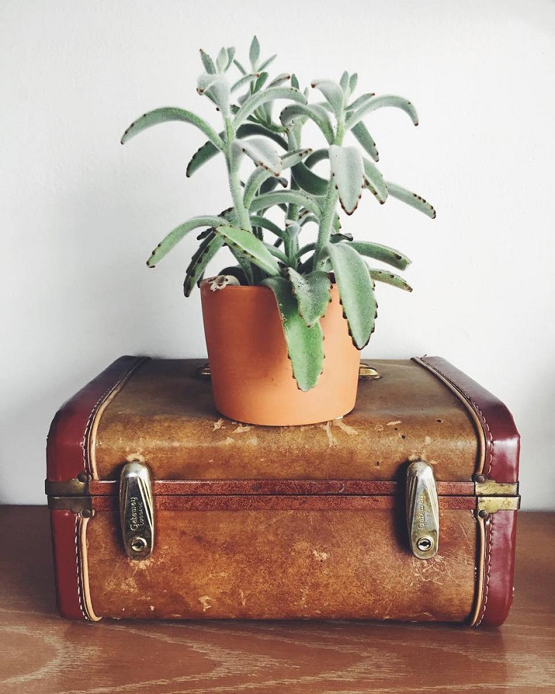 Suitcase For Plant Stand
