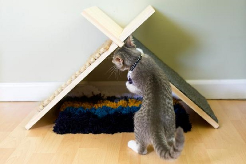 Cool diy cat tent that easy to make 7