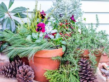 Add winter planters
