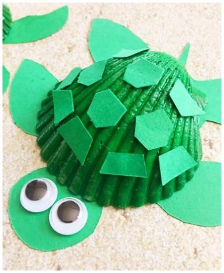 Seashell turtle for kids
