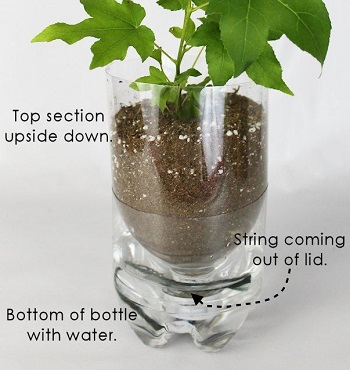 A recycled bottle for diy self-watering planter Crafting DIY Self-Watering Planters You Can Do