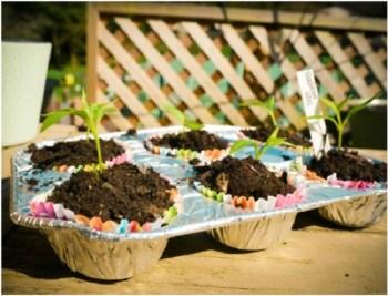 Diy cool repurposed muffin tin seed pots