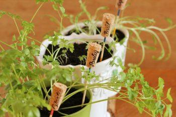 Diy cork plant labels